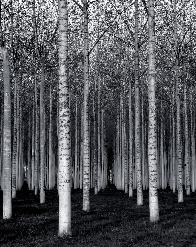 A piece of fine art art photography titled The Forest for the Trees by David Scarbrough