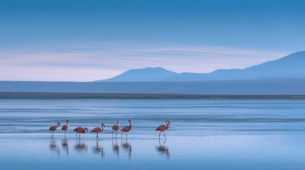 A piece of fine art art photography titled Flamingoes by Vincent Chen