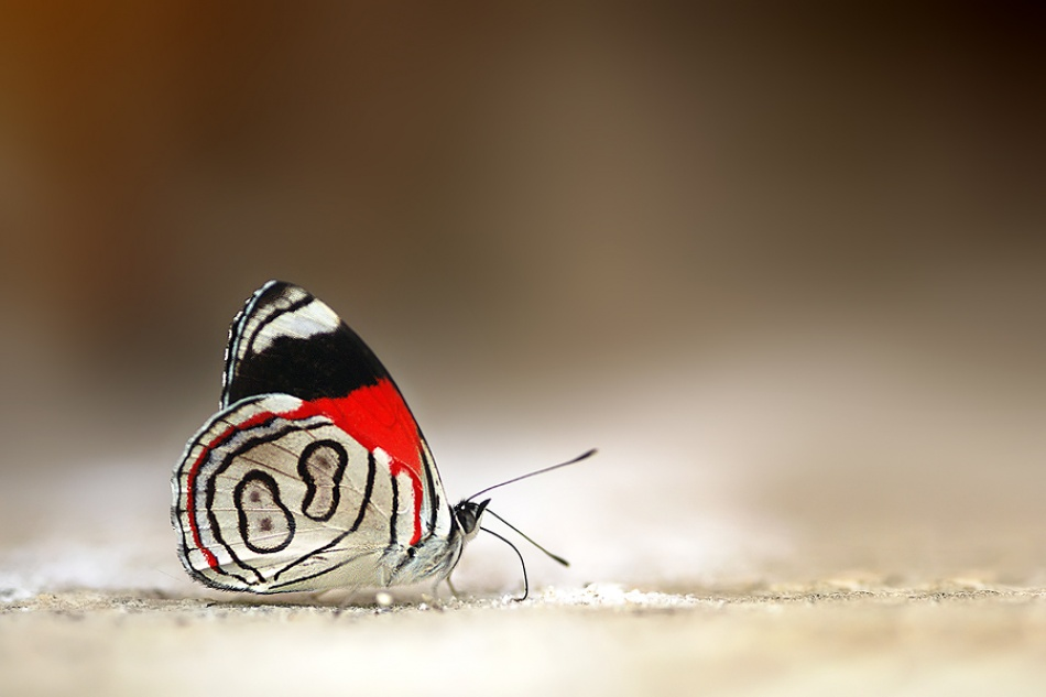 A piece of fine art art photography titled 88 Butterfly by Boris Godfroid