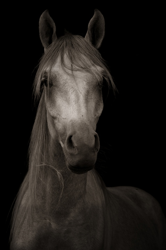 A piece of fine art art photography titled Arabian by Sharr