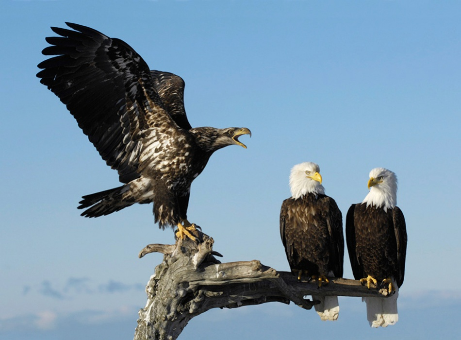 A piece of fine art art photography titled Bawler by Harry Eggens