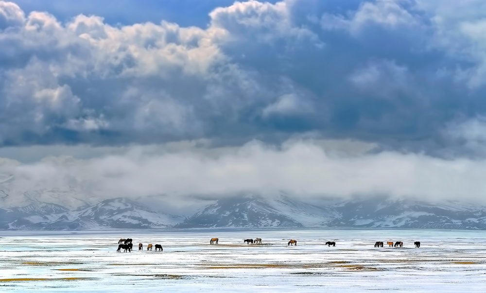 A piece of fine art art photography titled Horses On the Snow by Hua Zhu