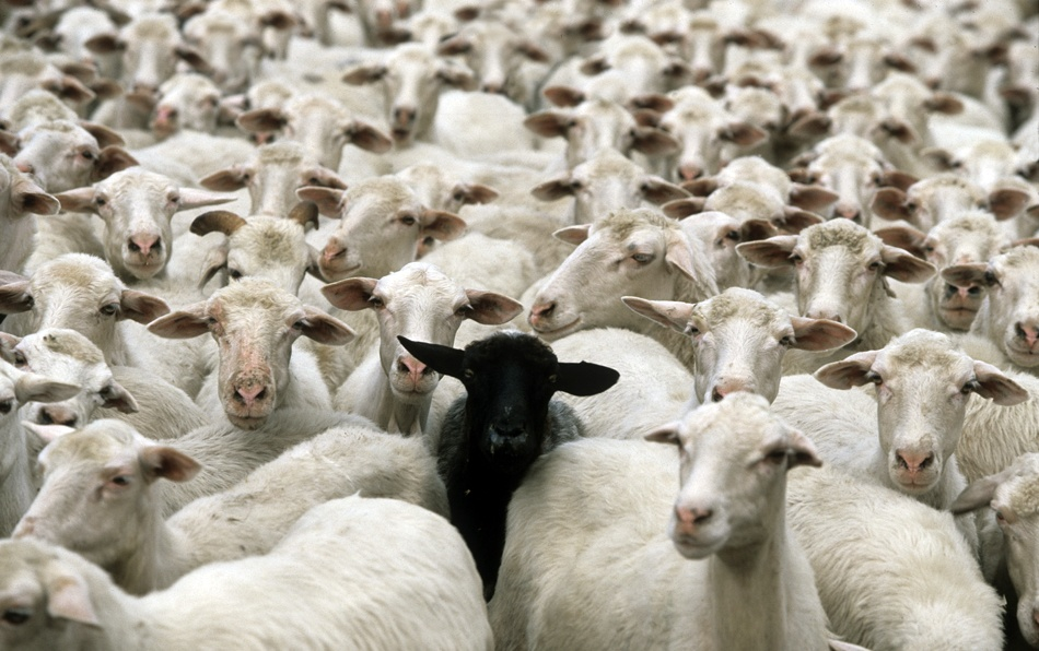 A piece of fine art art photography titled Black Sheep by spin360