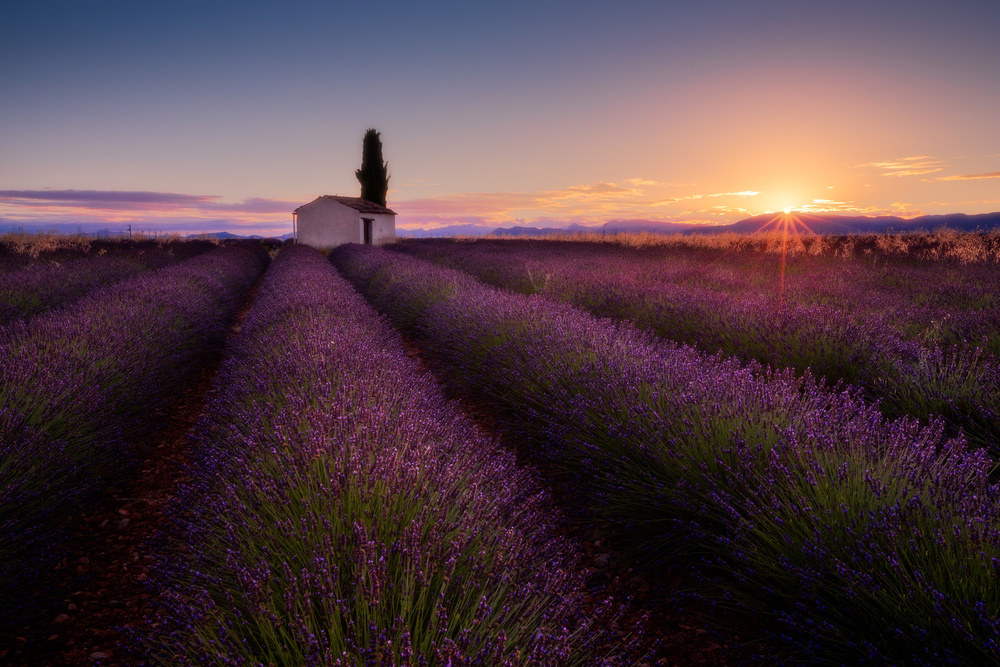 A piece of fine art art photography titled Provence Lavender by Donald Luo