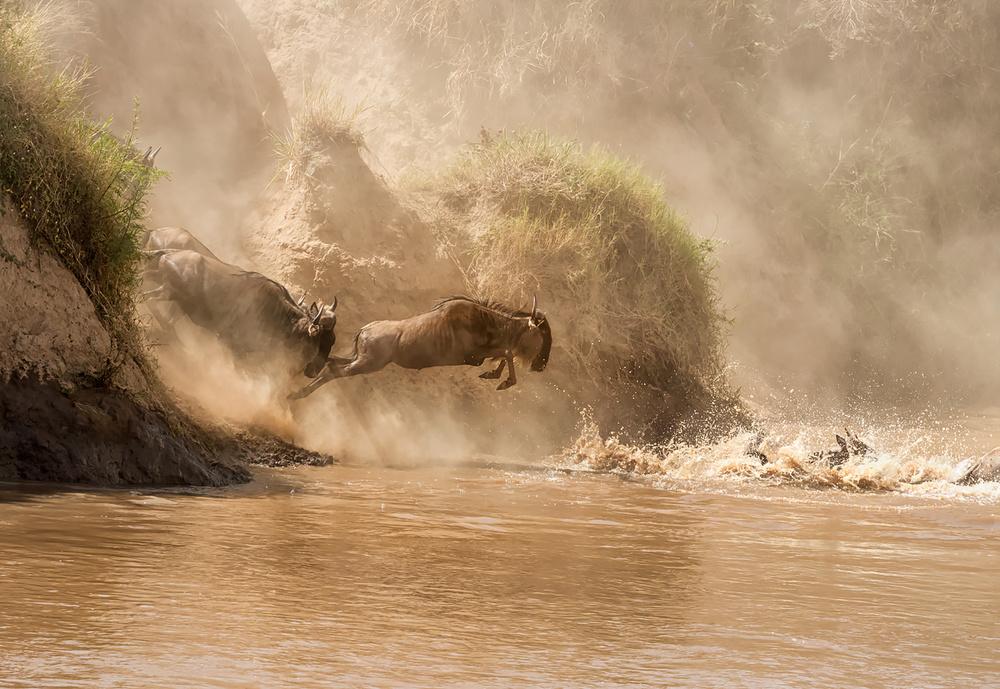 A piece of fine art art photography titled Safari,africa,kenya,masai,mara,wildebeests by Mary Jiang