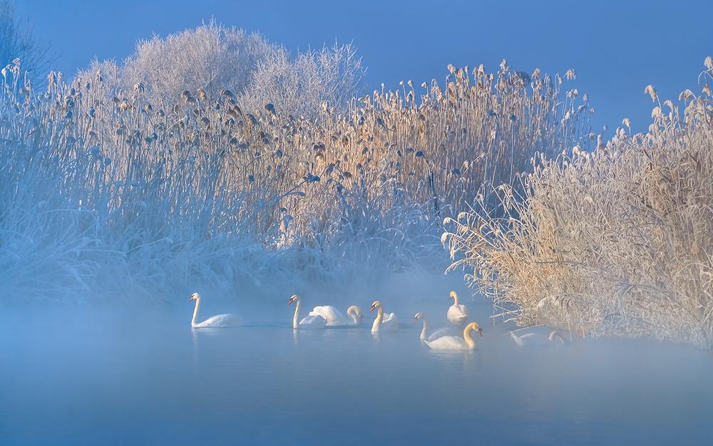 A piece of fine art art photography titled Blue Swan Lake by Hua Zhu