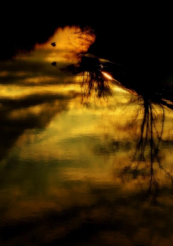 A piece of fine art art photography titled Last by Sandi Gorkic