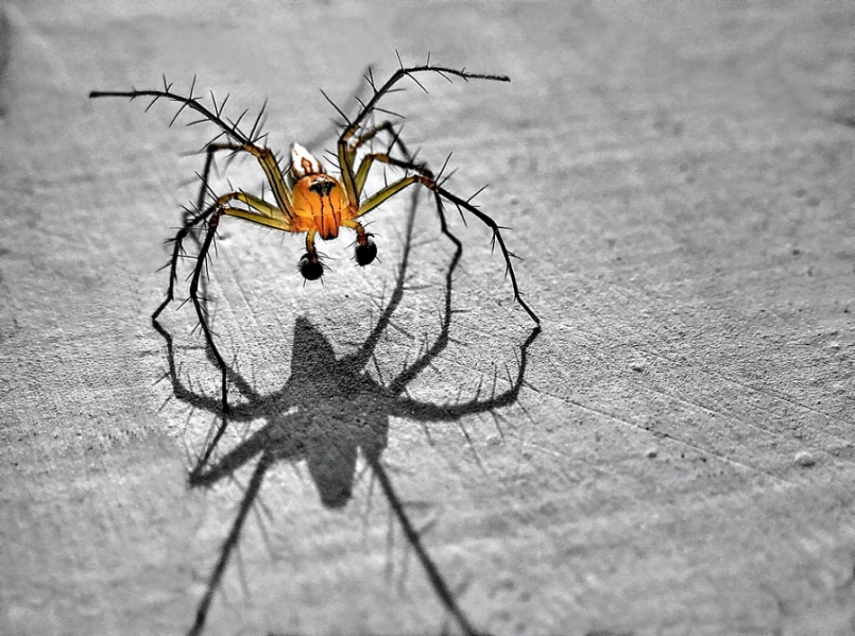 A piece of fine art art photography titled Spider by IRAWAN YUWONO