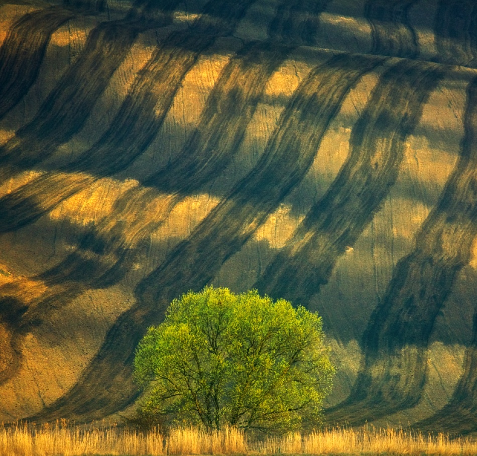 A piece of fine art art photography titled Tree  by Krzysztof Browko