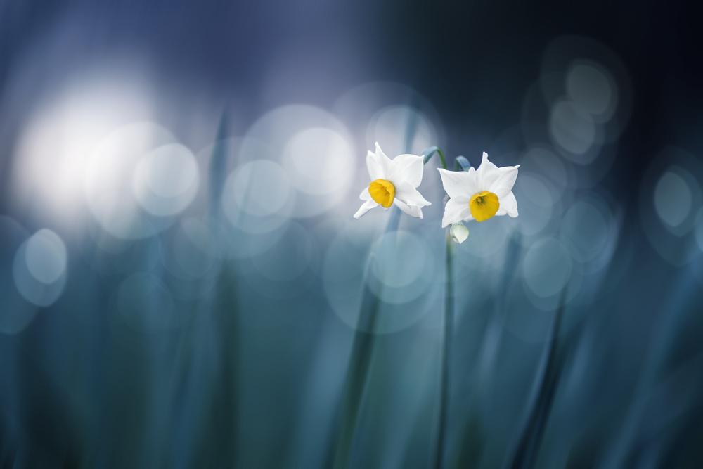 A piece of fine art art photography titled Spirit of Moment by Takashi Suzuki