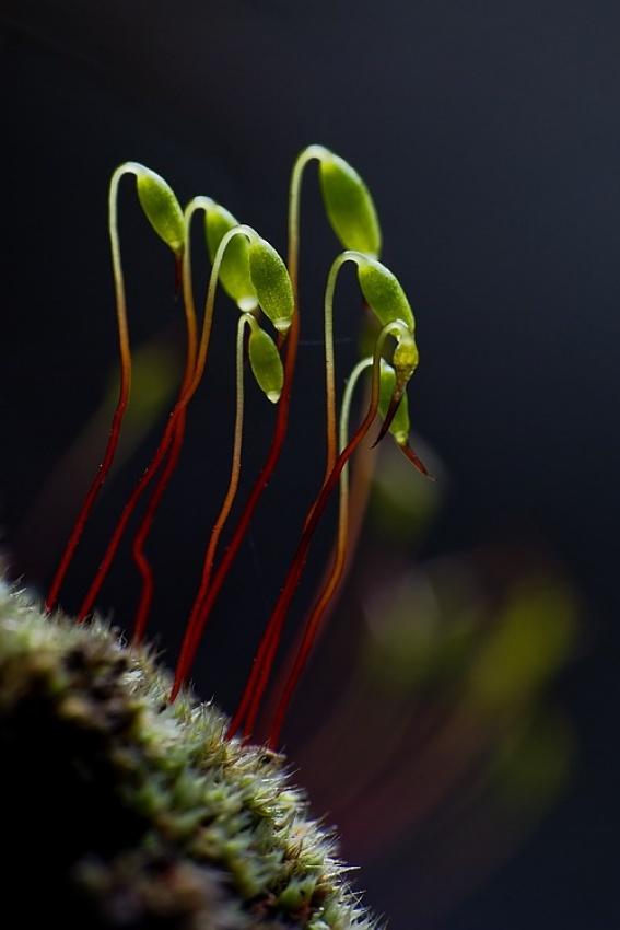 A piece of fine art art photography titled Little Green Aliens by Szabolcs Sipos