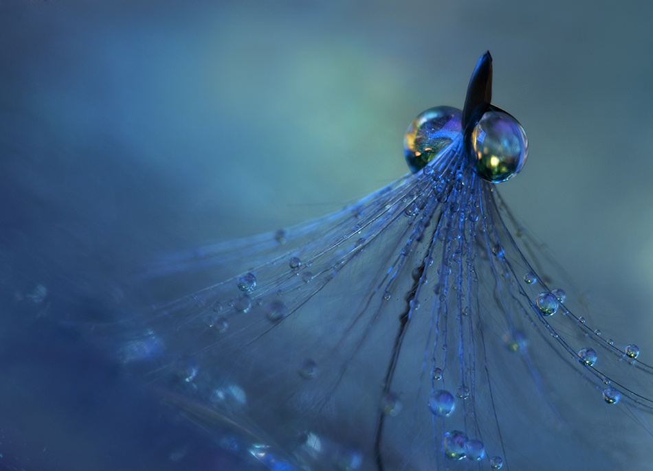 A piece of fine art art photography titled Dancing Into the Blue Night by Heidi Westum