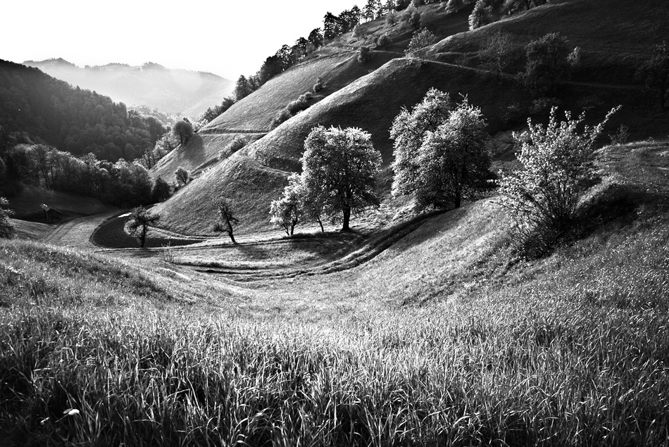A piece of fine art art photography titled Landscape BW by yanka