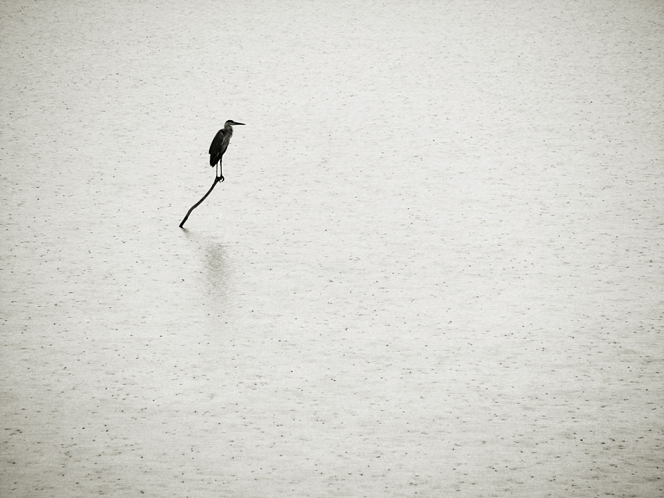 A piece of fine art art photography titled Heron In Rain by Victor Minghir
