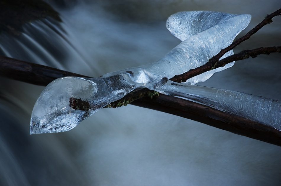 A piece of fine art art photography titled Ice Lizzard by roarmagne