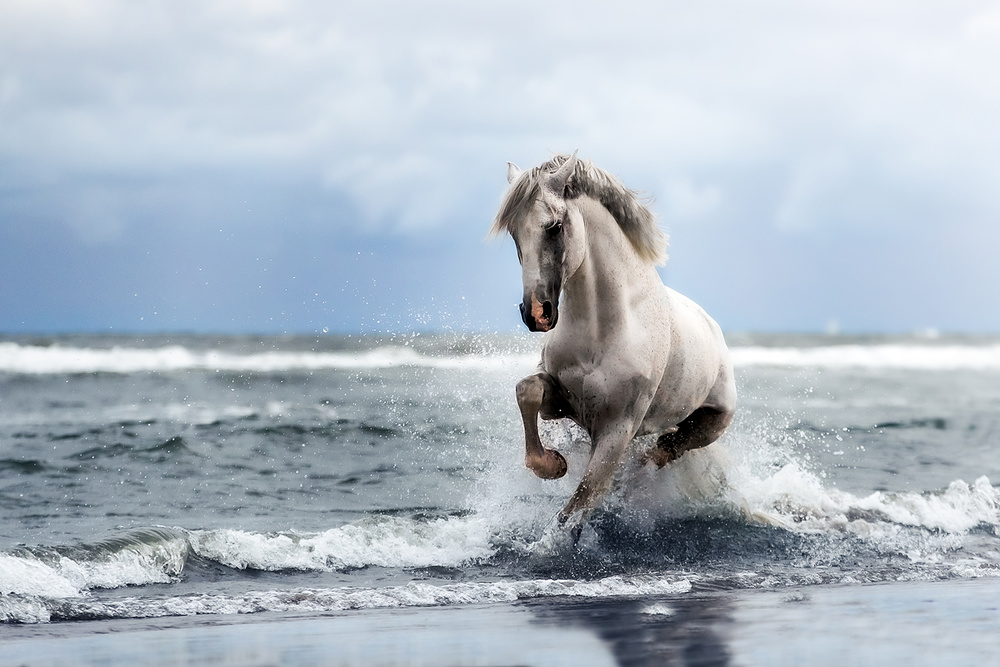 A piece of fine art art photography titled From the Sea by Ans Roels