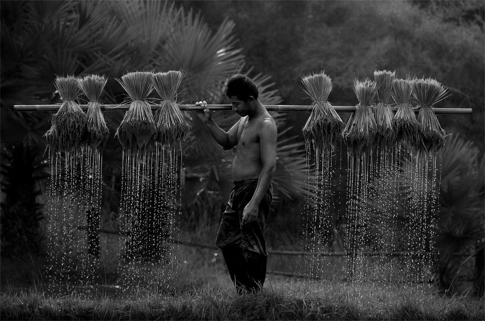 A piece of fine art art photography titled Farmer by yothininsuk
