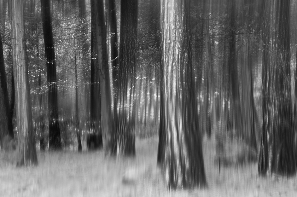 A piece of fine art art photography titled Distant Dogwoods In BW by Jerry Berry