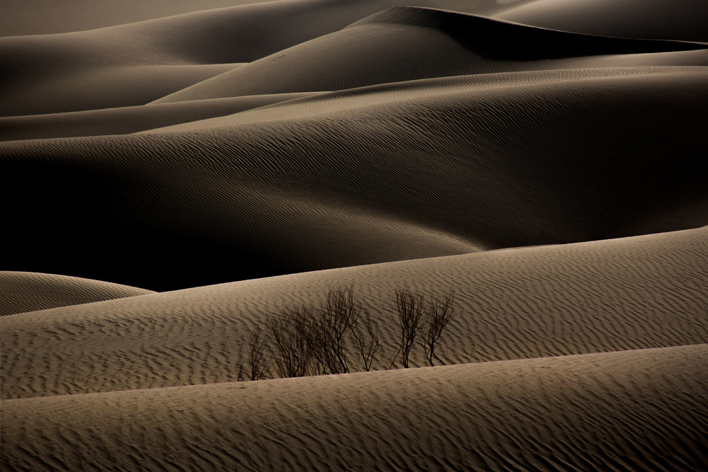A piece of fine art art photography titled Desert2 by Amin Dehghan
