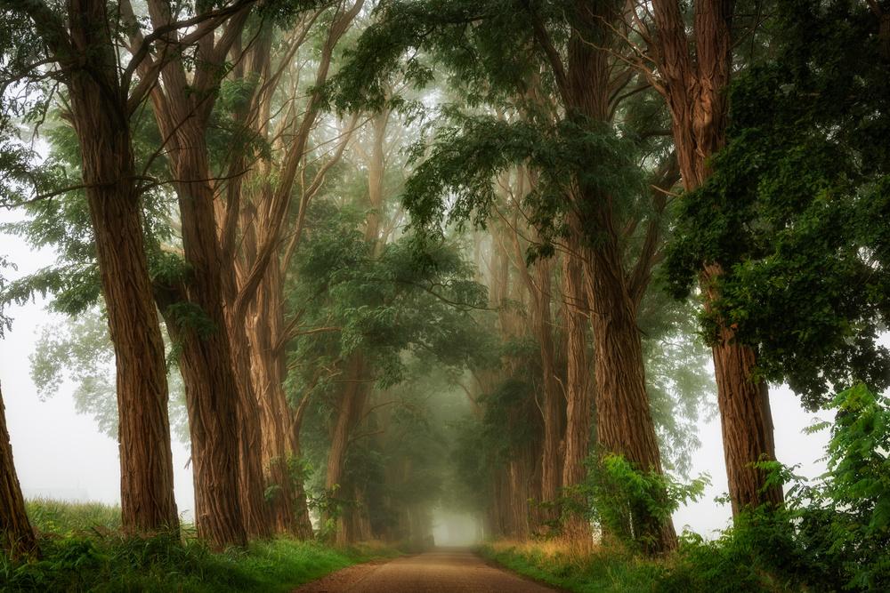 A piece of fine art art photography titled Acacia's In the Mist by Lars van de Goor