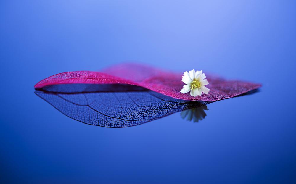 A piece of fine art art photography titled Destiny by Judy Tseng