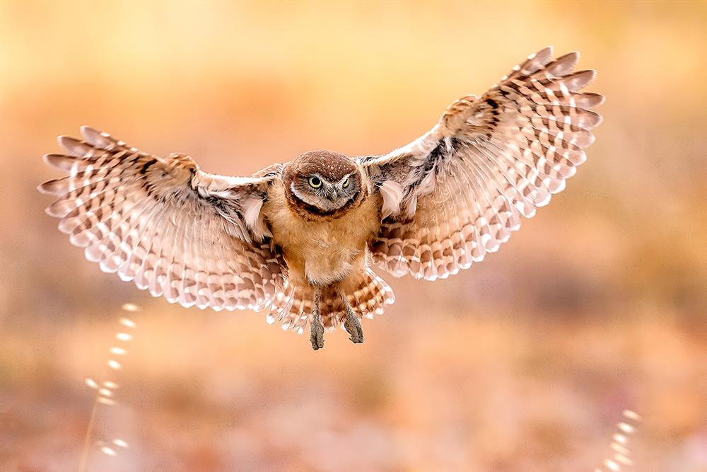 First Landing-