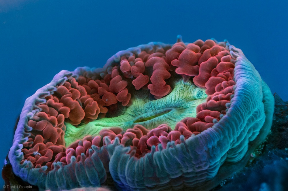 Tiny fluorescent coral