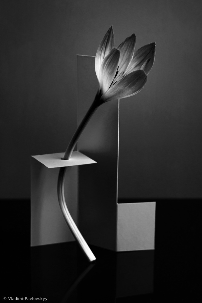 Flower in a modern setting