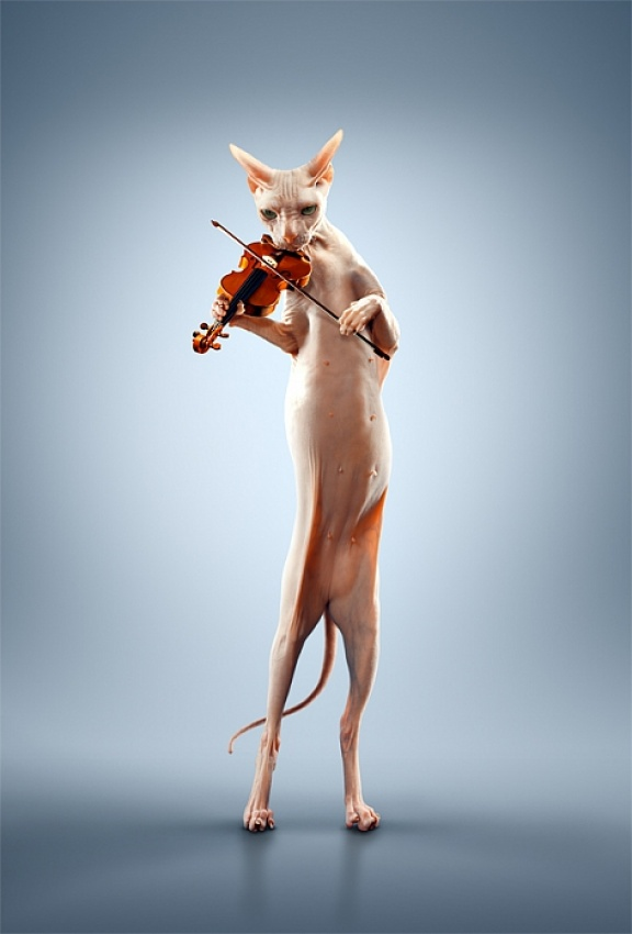 A piece of fine art art photography titled Just a Cat Playing the Violin by Alexei Sovertkov