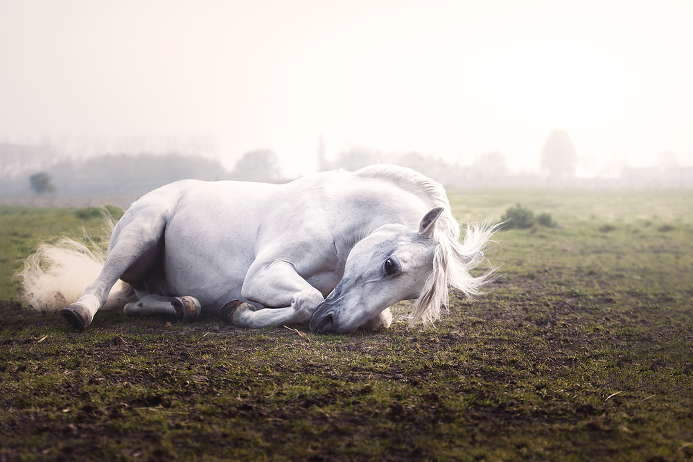 A piece of fine art art photography titled Roll Over by Ans Roels