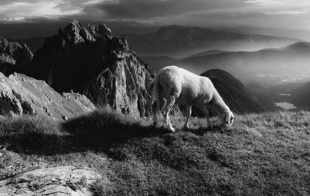 A piece of fine art art photography titled Sheep In the Mountains by Ales Krivec