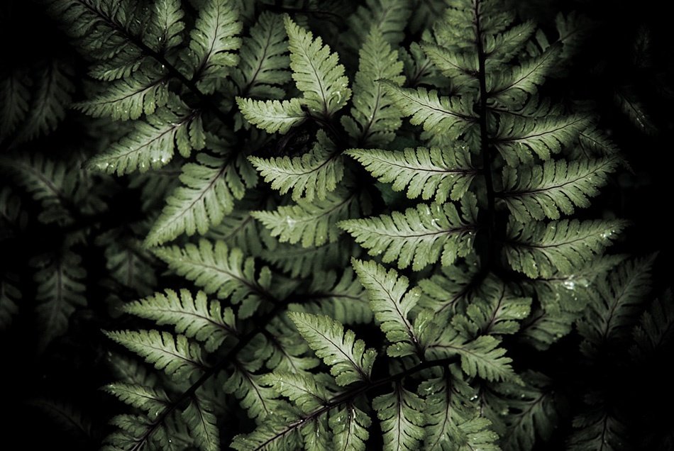 A piece of fine art art photography titled Fern by Jeffrey Morris