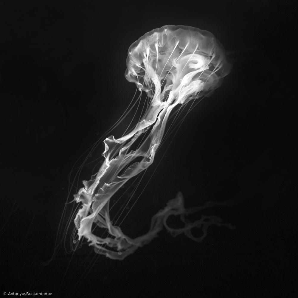 Jelly Fish Dance