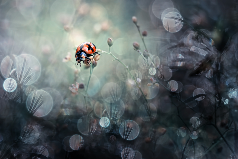 A piece of fine art art photography titled Along With the Morning Dew by r. adi kurniawan
