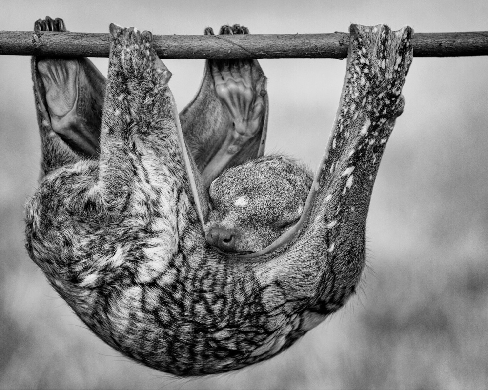 A piece of fine art art photography titled Sweet Sleeping by Hendy Lie