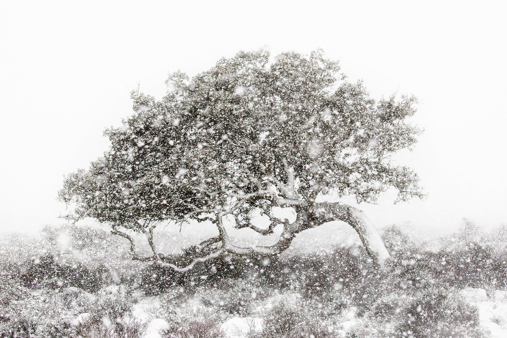 A piece of fine art art photography titled Winter In Sardinia by Alessandro Carboni