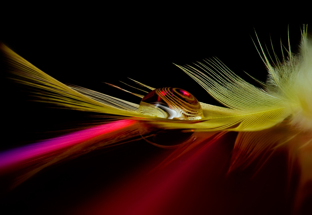 A piece of fine art art photography titled Colors In the Drop by Aida Ianeva