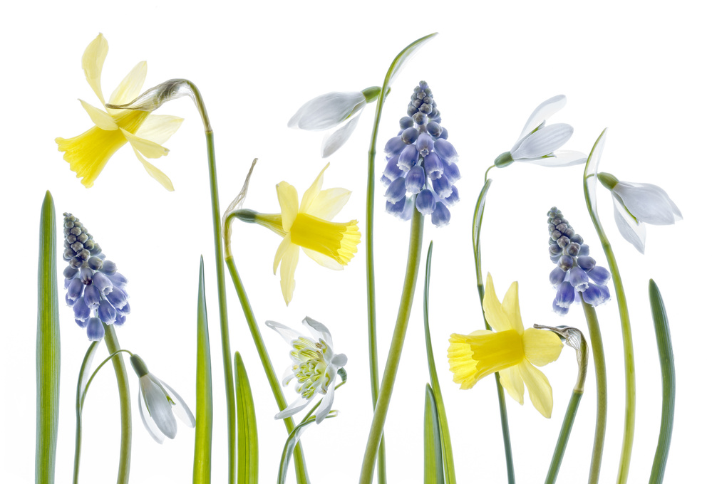 A piece of fine art art photography titled Spring by Mandy Disher