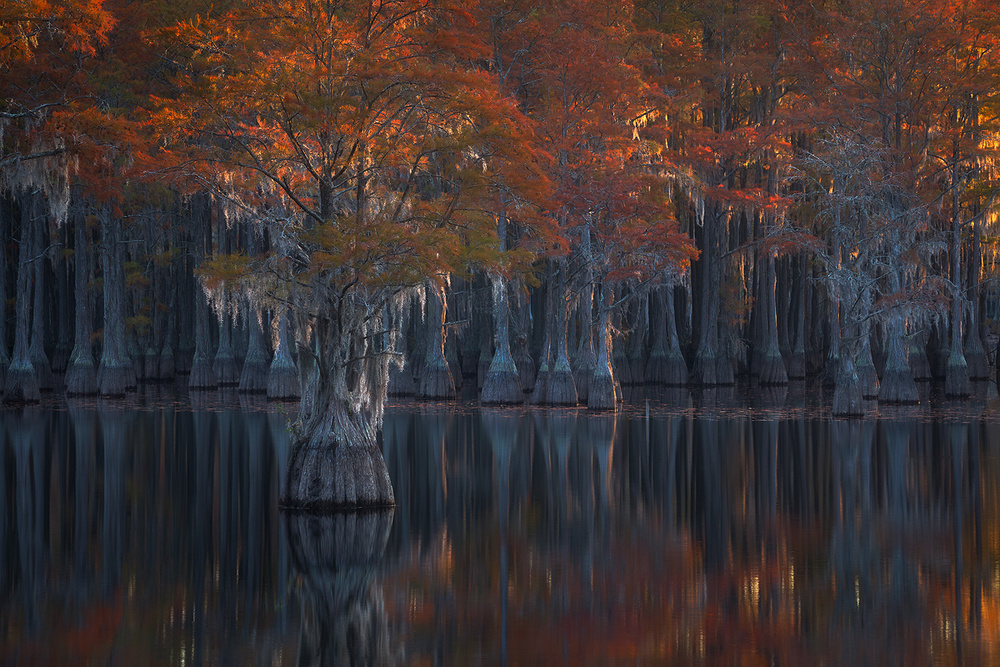A piece of fine art art photography titled Cypress Autumn by Chad Routhier Photography