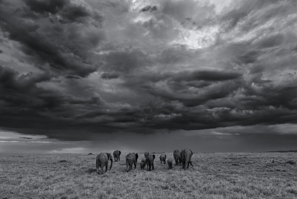 A piece of fine art art photography titled Into the Storm by Morkel Erasmus