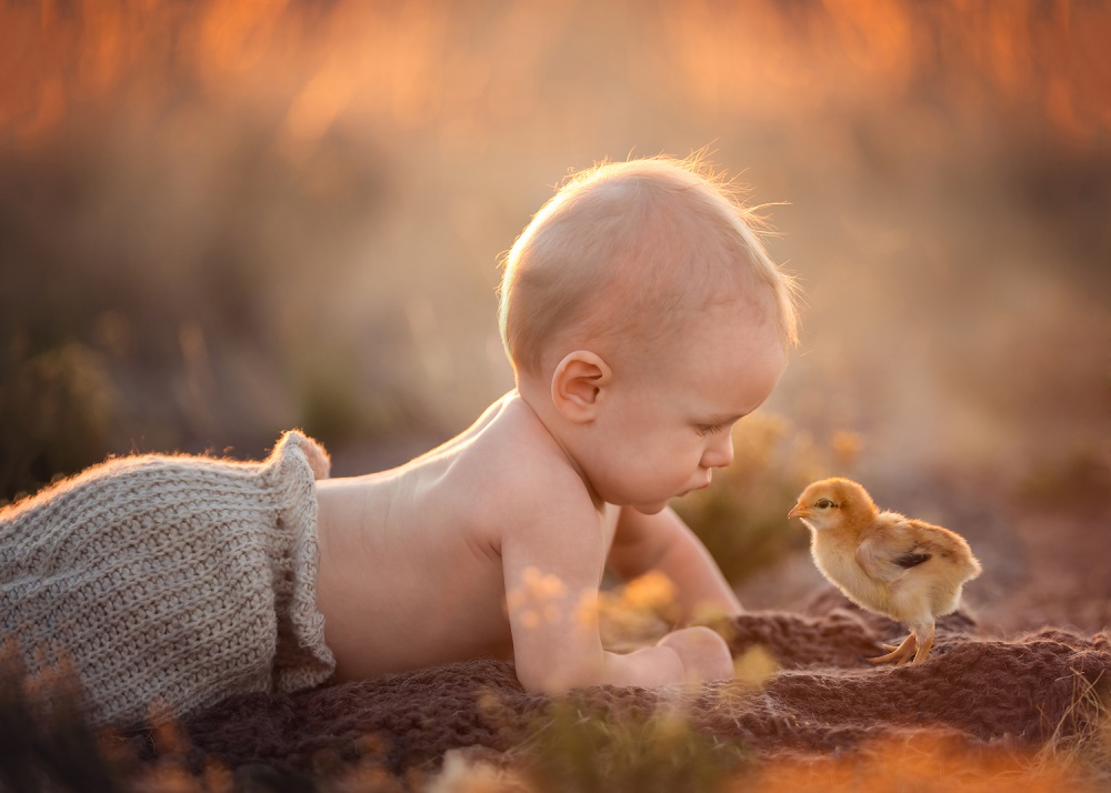 A piece of fine art art photography titled Spring Babies by Lisa Holloway