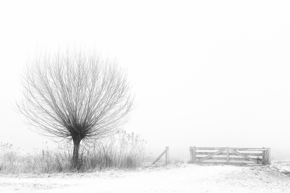 A piece of fine art art photography titled Access to Fog by Greetje van Son