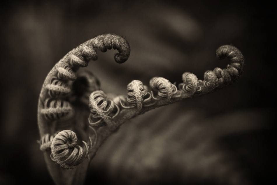 A piece of fine art art photography titled Shapes by Piotr Haskiewicz